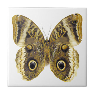 Owl Butterfly Small Square Tile