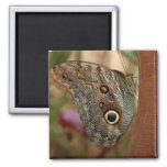 Owl Butterfly Square Magnet