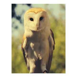 Owl Custom Flyer