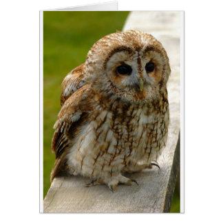 Owl Eyes Cards
