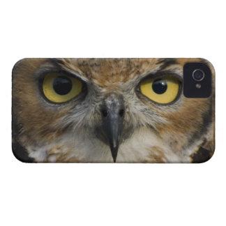 Owl Eyes iPhone 4 Cases