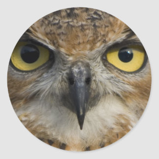 Owl Eyes Round Sticker
