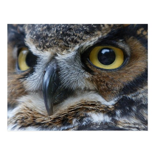Owl Eyes Wildlife Postcard