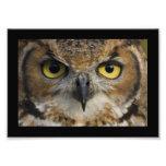 Owl Eyes with black border Art Photo