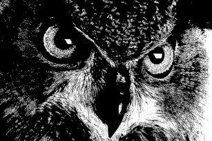 Black And White Owl Posters Prints Zazzle Uk