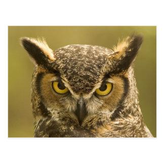 Owl face postcard