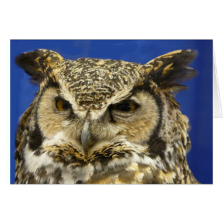 OWL - Great Horned Owl Face Photo Greeting Card