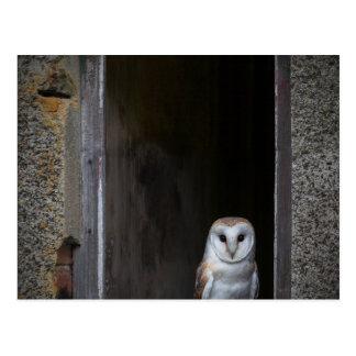 Owl In A Barn Postcard