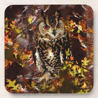 Owl in Autumn Coaster