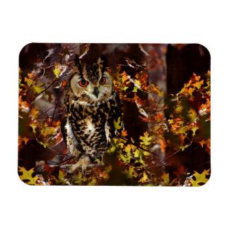 Owl in Autumn Rectangular Photo Magnet