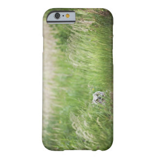 Owl In The Grass Barely There iPhone 6 Case