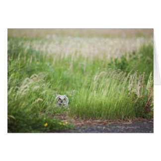 Owl In The Grass Card