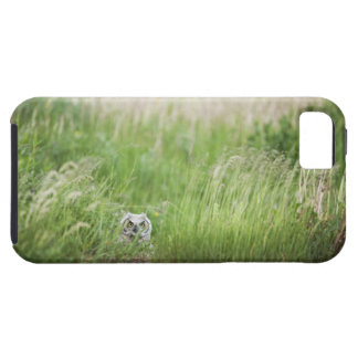Owl In The Grass Tough iPhone 5 Case