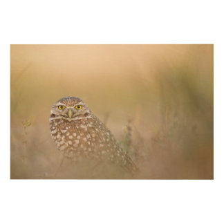 Owl In The Mist Wood Wall Art