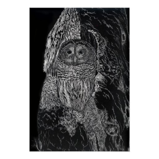 Owl in Tree Bird Nature Drawing Black White Posters