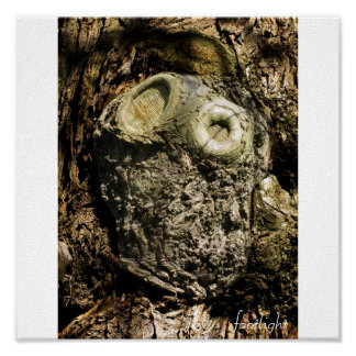 Owl in tree - literally! poster