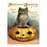 Owl Jack O Lantern Pumpkin Post Cards
