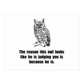 Owl Judge You Postcard