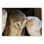 Owl kisses greeting cards
