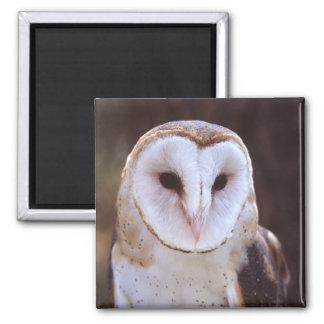 owl refrigerator magnets