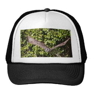 Owl Milky Eagle Hats