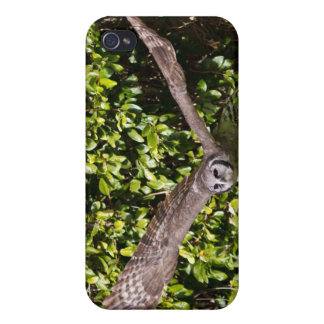 Owl Milky Eagle Covers For iPhone 4
