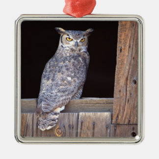 Owl perched in a window christmas ornament