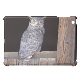 Owl perched in a window iPad mini cases
