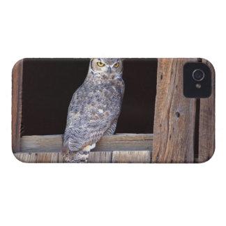 Owl perched in a window iPhone 4 cases