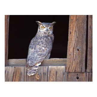 Owl perched in a window postcard