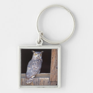 Owl perched in a window Silver-Colored square key ring