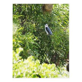 Owl perching on a tree postcard