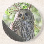 Owl Photo Drink Coasters