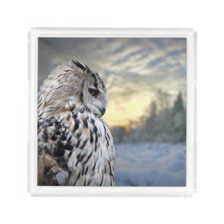 Owl portrait on winter forest background acrylic tray