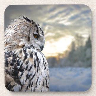 Owl portrait on winter forest background coaster