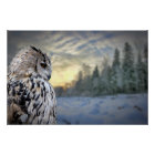 Owl portrait on winter forest background poster