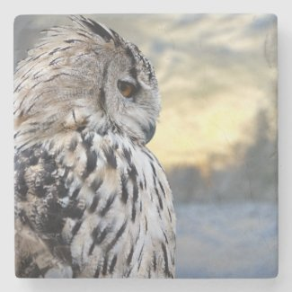 Owl portrait on winter forest background stone coaster