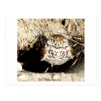 Owl . Postcard