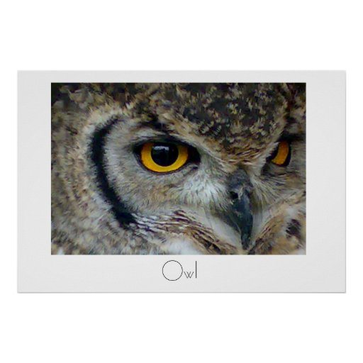 Owl Poster Design