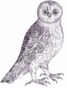 Owl Sounds Gifts & Gift Ideas | Zazzle UK