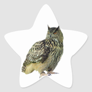 Owl Star Sticker