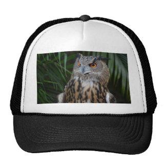 owl surprised right bird mesh hat