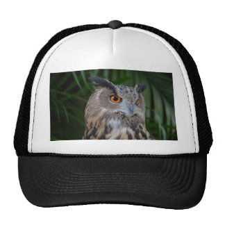 owl turning to the right head view mesh hat