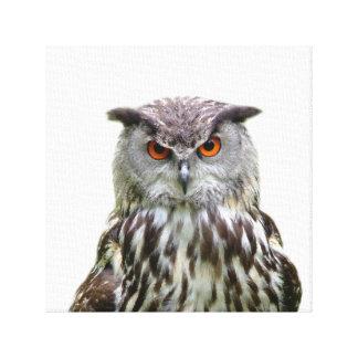 Owl wild animal photo nursery kids room canvas print