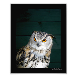 Owl with Attitude Photograph