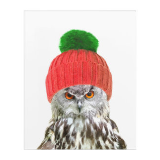 Owl with cap funny animal portrait acrylic wall art