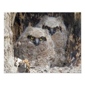 Owlets Photo