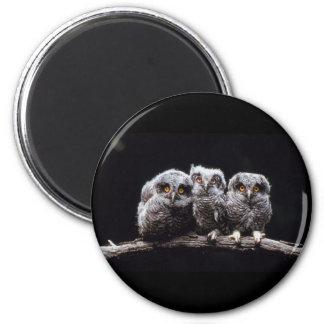 Owls 6 Cm Round Magnet