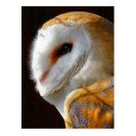 OWLS POSTCARDS