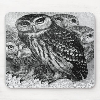 Owls, vintage engraving mouse pads